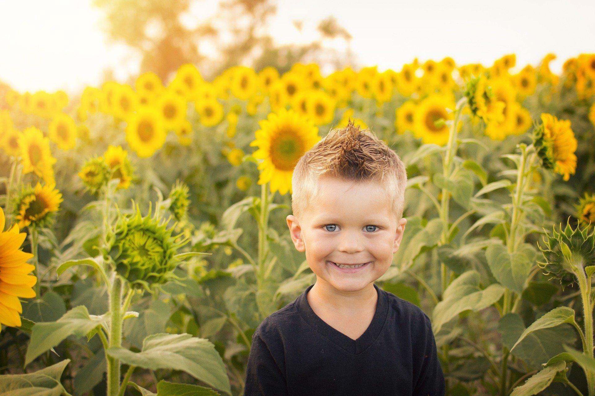 farmer słonecznika