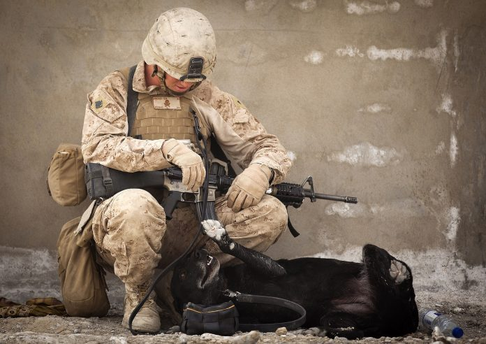 pies wojskowy